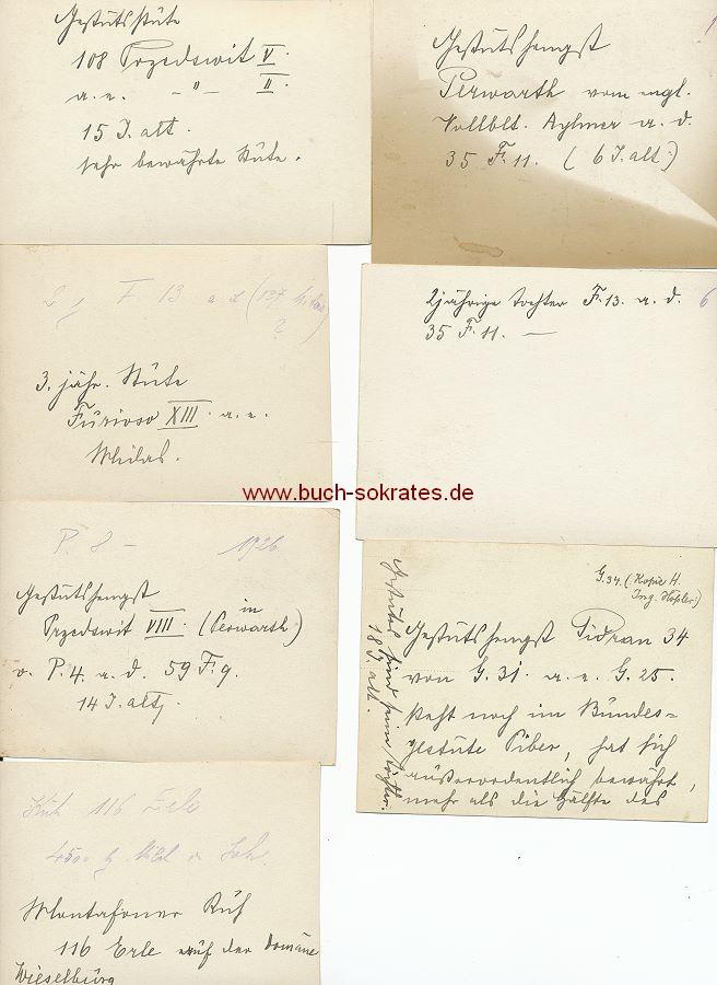 Foto Zuchtpferde aus Salzburg / Österreich (ca. 1925)