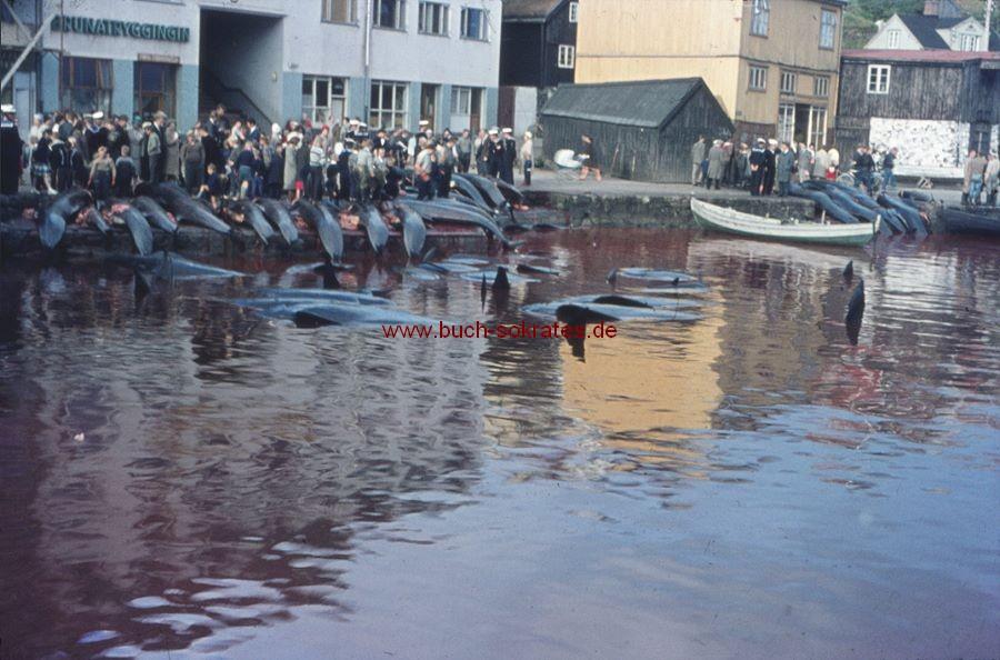6 Foto-Dias Walfang auf Island (ca. 1961/62)