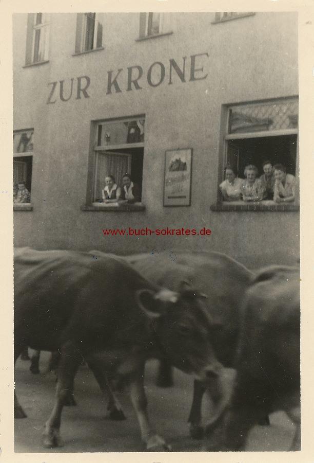 Foto Kühe vor dem Gasthaus zur Krone in Friedrichroda / Thüringen (1961)