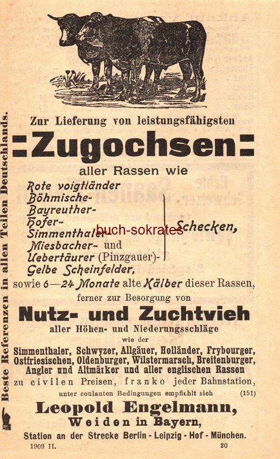 Werbe-Anzeige / Werbung/Reklame Zugochsen - Leopold Engelmann, Weiden in Bayern (HK09)