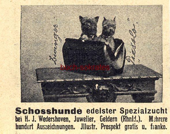 Werbe-Anzeige / Werbung/Reklame Schoßhunde edelster Spezialzucht - H.J. Wedershoven, Geldern (DW08/47)